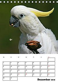 Papageien - Graupapagei, Rosella und Co. (Tischkalender 2019 DIN A5 hoch) - Produktdetailbild 12