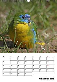 Papageien - Graupapagei, Rosella und Co. (Wandkalender 2019 DIN A3 hoch) - Produktdetailbild 1