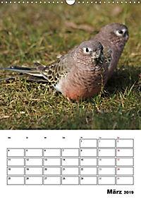 Papageien - Graupapagei, Rosella und Co. (Wandkalender 2019 DIN A3 hoch) - Produktdetailbild 8