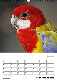 Papageien - Graupapagei, Rosella und Co. (Wandkalender 2019 DIN A3 hoch) - Produktdetailbild 13