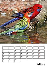 Papageien - Graupapagei, Rosella und Co. (Wandkalender 2019 DIN A3 hoch) - Produktdetailbild 7