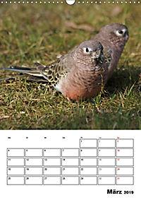 Papageien - Graupapagei, Rosella und Co. (Wandkalender 2019 DIN A3 hoch) - Produktdetailbild 3