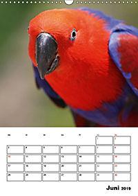 Papageien - Graupapagei, Rosella und Co. (Wandkalender 2019 DIN A3 hoch) - Produktdetailbild 6