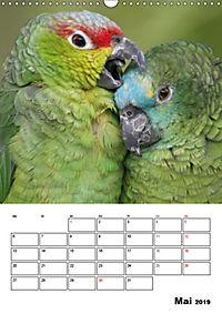Papageien - Graupapagei, Rosella und Co. (Wandkalender 2019 DIN A3 hoch) - Produktdetailbild 5