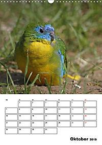 Papageien - Graupapagei, Rosella und Co. (Wandkalender 2019 DIN A3 hoch) - Produktdetailbild 10
