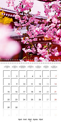 Passing beauty - Cherry blossoms in Japan (Wall Calendar 2019 300 × 300 mm Square) - Produktdetailbild 4