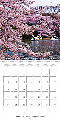 Passing beauty - Cherry blossoms in Japan (Wall Calendar 2019 300 × 300 mm Square) - Produktdetailbild 6