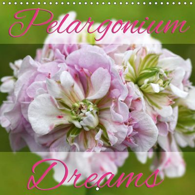 Pelargonium Dreams (Wall Calendar 2019 300 × 300 mm Square), Martina Cross