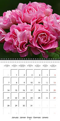 Pelargonium Dreams (Wall Calendar 2019 300 × 300 mm Square) - Produktdetailbild 1