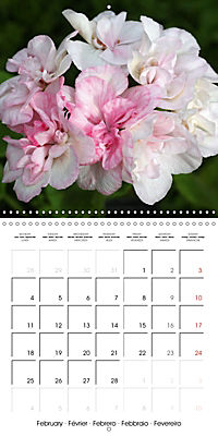 Pelargonium Dreams (Wall Calendar 2019 300 × 300 mm Square) - Produktdetailbild 2