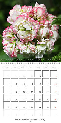 Pelargonium Dreams (Wall Calendar 2019 300 × 300 mm Square) - Produktdetailbild 3