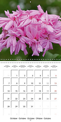 Pelargonium Dreams (Wall Calendar 2019 300 × 300 mm Square) - Produktdetailbild 10