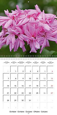 Pelargonium Dreams (Wall Calendar 2019 300 × 300 mm Square) - Produktdetailbild 10
