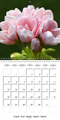 Pelargonium Dreams (Wall Calendar 2019 300 × 300 mm Square) - Produktdetailbild 8