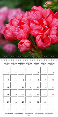 Pelargonium Dreams (Wall Calendar 2019 300 × 300 mm Square) - Produktdetailbild 11