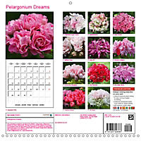 Pelargonium Dreams (Wall Calendar 2019 300 × 300 mm Square) - Produktdetailbild 13