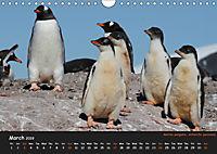 Penguins 2019 (Wall Calendar 2019 DIN A4 Landscape) - Produktdetailbild 3