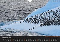 Penguins 2019 (Wall Calendar 2019 DIN A4 Landscape) - Produktdetailbild 10