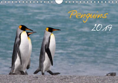 Penguins 2019 (Wall Calendar 2019 DIN A4 Landscape), Brigitte Schlögl