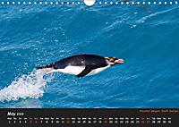 Penguins 2019 (Wall Calendar 2019 DIN A4 Landscape) - Produktdetailbild 5