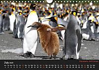 Penguins 2019 (Wall Calendar 2019 DIN A4 Landscape) - Produktdetailbild 7