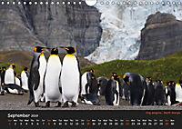 Penguins 2019 (Wall Calendar 2019 DIN A4 Landscape) - Produktdetailbild 9