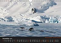 Penguins 2019 (Wall Calendar 2019 DIN A4 Landscape) - Produktdetailbild 12