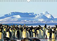 Penguins Unique and amazing birds (Wall Calendar 2019 DIN A4 Landscape) - Produktdetailbild 8