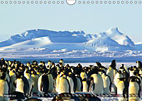 Penguins Unique and amazing birds (Wall Calendar 2019 DIN A4 Landscape) - Produktdetailbild 8