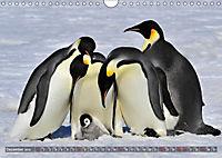 Penguins Unique and amazing birds (Wall Calendar 2019 DIN A4 Landscape) - Produktdetailbild 12