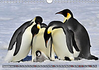 Penguins Unique and amazing birds (Wall Calendar 2019 DIN A4 Landscape) - Produktdetailbild 12