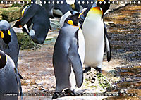 Penguins Unique and amazing birds (Wall Calendar 2019 DIN A4 Landscape) - Produktdetailbild 10
