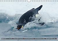 Penguins Unique and amazing birds (Wall Calendar 2019 DIN A4 Landscape) - Produktdetailbild 3