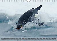 Penguins Unique and amazing birds (Wall Calendar 2019 DIN A4 Landscape) - Produktdetailbild 3