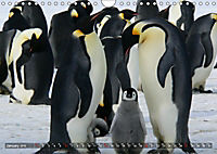 Penguins Unique and amazing birds (Wall Calendar 2019 DIN A4 Landscape) - Produktdetailbild 1