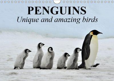 Penguins Unique and amazing birds (Wall Calendar 2019 DIN A4 Landscape), Elisabeth Stanzer
