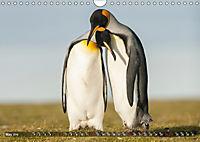 Penguins Unique and amazing birds (Wall Calendar 2019 DIN A4 Landscape) - Produktdetailbild 5