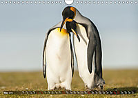 Penguins Unique and amazing birds (Wall Calendar 2019 DIN A4 Landscape) - Produktdetailbild 5