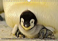 Penguins Unique and amazing birds (Wall Calendar 2019 DIN A4 Landscape) - Produktdetailbild 9
