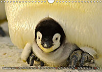 Penguins Unique and amazing birds (Wall Calendar 2019 DIN A4 Landscape) - Produktdetailbild 9