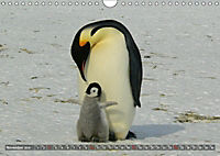 Penguins Unique and amazing birds (Wall Calendar 2019 DIN A4 Landscape) - Produktdetailbild 11