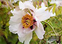 Peony Rose Without Thorns (Wall Calendar 2019 DIN A3 Landscape) - Produktdetailbild 1