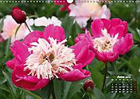 Peony Rose Without Thorns (Wall Calendar 2019 DIN A3 Landscape) - Produktdetailbild 6