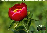 Peony Rose Without Thorns (Wall Calendar 2019 DIN A3 Landscape) - Produktdetailbild 4