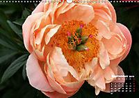 Peony Rose Without Thorns (Wall Calendar 2019 DIN A3 Landscape) - Produktdetailbild 9
