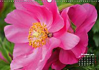 Peony Rose Without Thorns (Wall Calendar 2019 DIN A3 Landscape) - Produktdetailbild 10