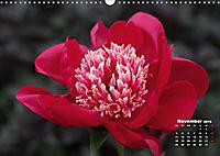 Peony Rose Without Thorns (Wall Calendar 2019 DIN A3 Landscape) - Produktdetailbild 11