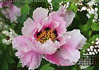 Peony Rose Without Thorns (Wall Calendar 2019 DIN A3 Landscape) - Produktdetailbild 5