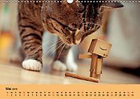 Peppi - Das Leben eines Danbo (Wandkalender 2019 DIN A3 quer) - Produktdetailbild 5