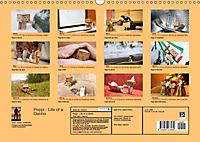 Peppi - Das Leben eines Danbo (Wandkalender 2019 DIN A3 quer) - Produktdetailbild 13